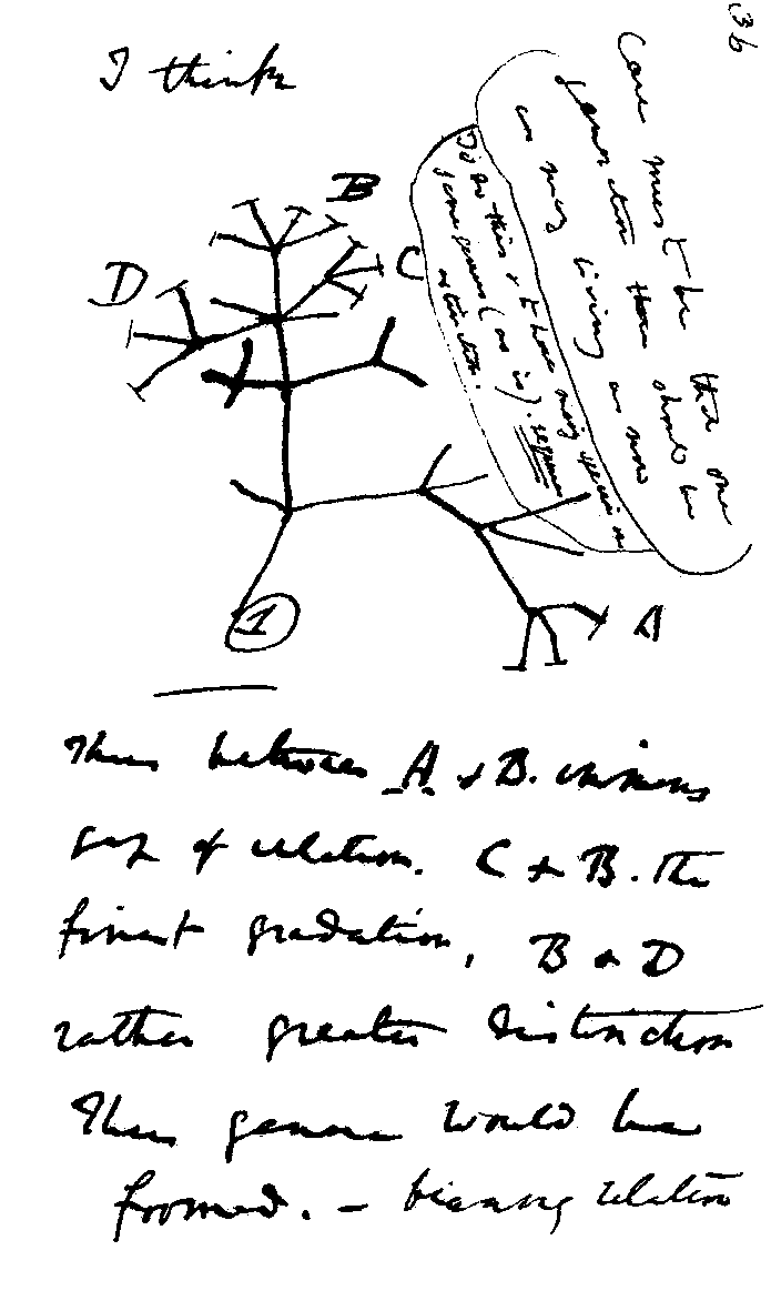 Charles Darwin's 1837 sketch, his first diagram of an evolutionary tree | Image via Wikipedia